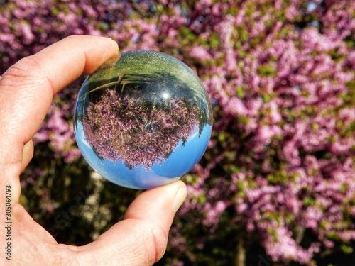 Vászonkép Cercis siliquastrum, albero di giuda, visione distorta da lensball, effetti part