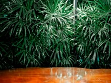 The Green Palm Leaf Background Contrasts With The Brown Wooden Floor.