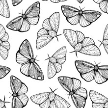 Butterfly Sketch Seamless Patt...