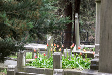 Headstones In A Cemetery With ...