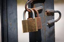 Rusty Old Locks On Gate