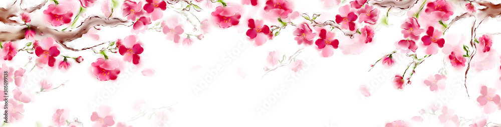 Blooming sakura japan cherry branch with pink flowers. Panorama sakura card design. Isolated on white background.