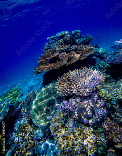 The coral reef in the Lau Islands Fiji