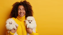 Dog Breed. Cheerful Dreamy Afro American Girl With Toothy Smile, Holds Two Fluffy Pets, Thinks About Buying Clothes And Dressing Animals, Makes Sure Dogs Are Treated Well, Wears Knitted Yellow Jumper
