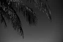 Black And White Palm Tree Ferns