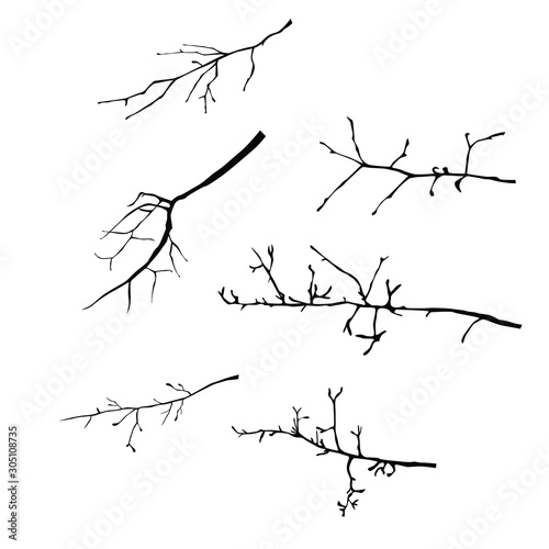 Vector silhouettes of the branch of trees,  black color, isolated on white backg Fototapet