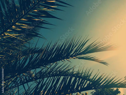Photo Palm tree leaves and the sky, summertime travel background