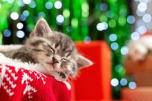 Sleeping Christmas Kitten. Bea...