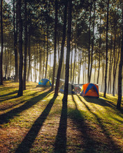 Camping Tent In Pine Forest Near Pang Oung Reservoir, Mae Hong Son, Thailand