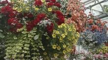 Huge Suspended Flower Arrangem...