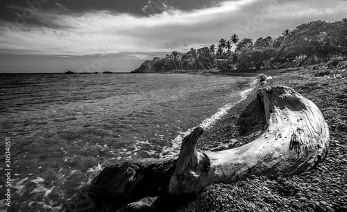 dramatic black and white image of driftwood on a caribbean beach in dominican republic