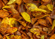 Colorful Assortment Of Autumn ...
