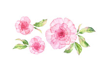 Watercolor Transparent Rose Fl...