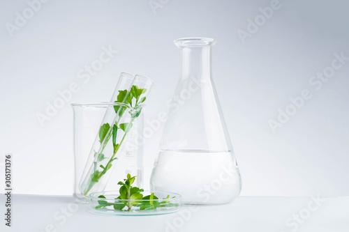 Cuadros en Lienzo  herbal medicine natural organic and scientific glassware