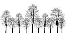 Many Trees Of Different Heights. Trees Without Leaves. Leafless Tree Trunks With Branches Without Leaves. Trees On A White Background. Large Plants For Decoration. Many Branches Without Leaves.