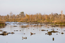 Low Water Level At Wetland Nat...