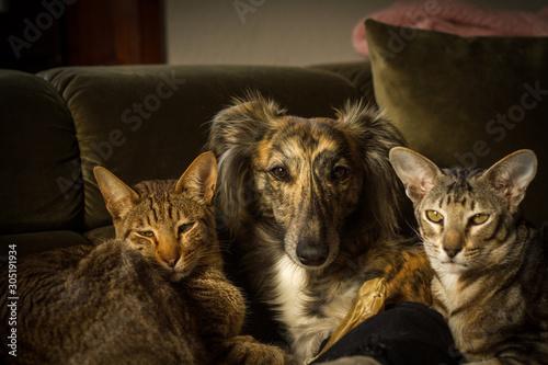 Canvas-taulu drei Freunde