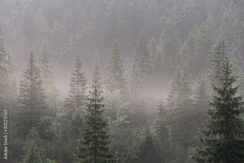Foto auf AluDibond Grau Landscape forested mountain slope in low lying cloud with the evergreen conifers, shrouded in mist.Tatra National Park. Poland. Europe.