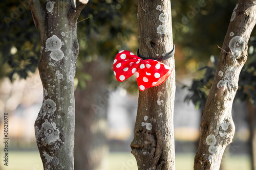 Red ribbon with with dots ties on a tree trunk branch. Wallpaper Mural