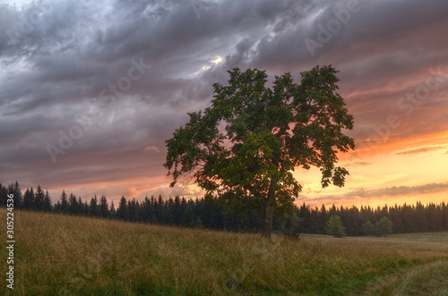 Majestic tree in the middle of meadow at dark gray romantic sunset.