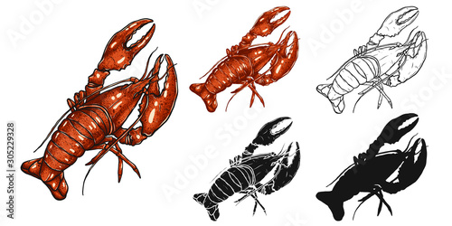 Fotografiet Set of lobster by hand drawing