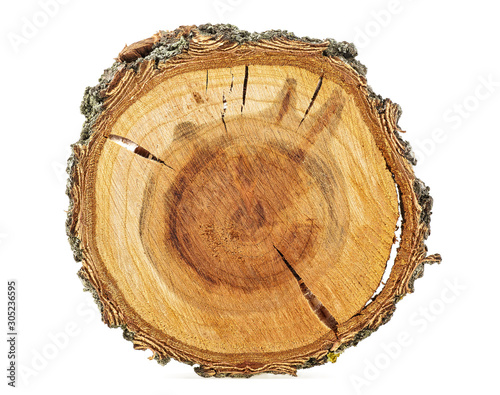 Photo sur Aluminium Texture de bois de chauffage Apricot tree - Cross section of tree trunk isolated on white background.