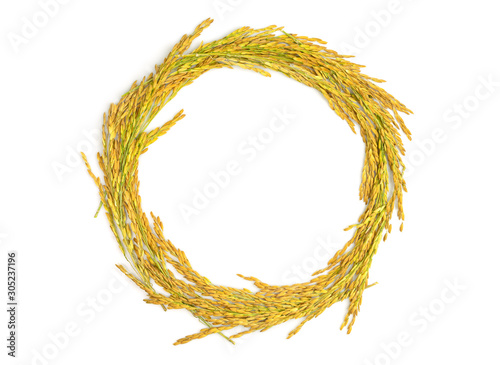 Fotografie, Obraz Ears of rice, paddy rice isolated on white background