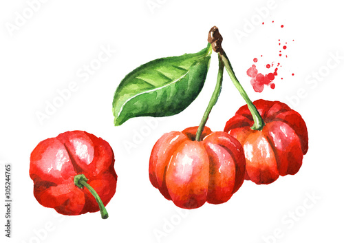 Fresh ripe red Acerola or Barbados cherry with green leaves, Watercolor hand dra Wallpaper Mural