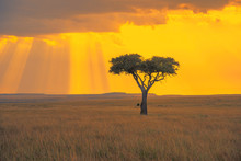 Lonely Tree And Beautiful Ligh...