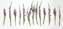 Branches Of Heather With Violet Flowers On A Light Background.