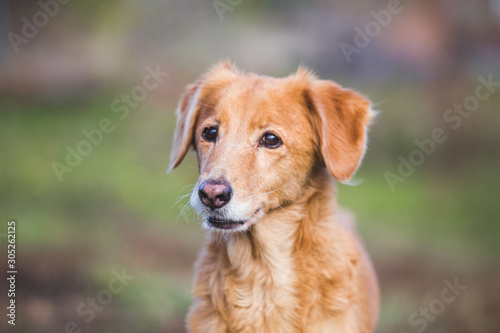 Photo Old senior dog. Happy adopted mixbreed dog