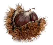Chestnut In Autumn With A Husk