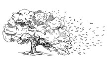 Spreading Tree On The Wind, Leaves Are Flowing