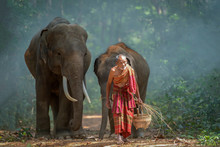 The Old Man Was Walking Out Of The Forest With The Elephant He Raised.