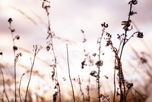 Autumn Dry Wild Grass And Diff...