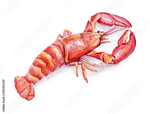 Fotografiet Watercolor illustration of lobster on white background