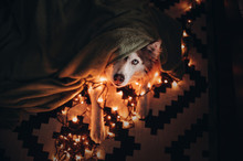 Christmas Dog Hiding From Fire...
