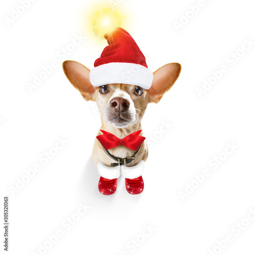 Foto op Canvas Crazy dog christmas santa claus dog