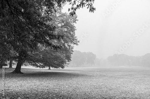 central park em manhattan no outono Canvas Print