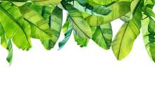 Jungle Botanical Watercolor Il...
