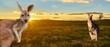 Leinwanddruck Bild - kangaroos with sunset Australia outback