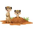 Cartoon two meerkats on white background