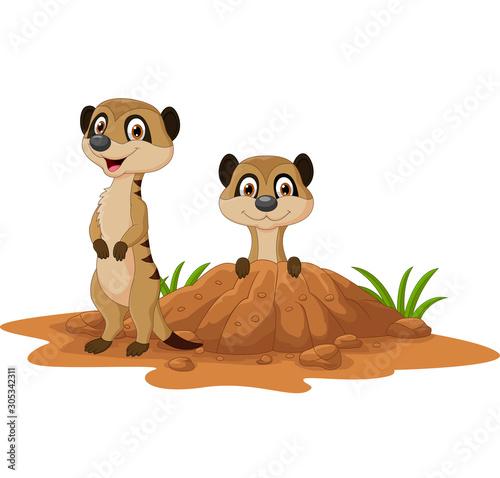 Fototapeta Cartoon two meerkats on white background