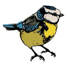 Eurasian Blue Tit Bird. Cyanistes Caeruleus. Hand Drawn Colorful Sketch. Isolated Vector Illustration.