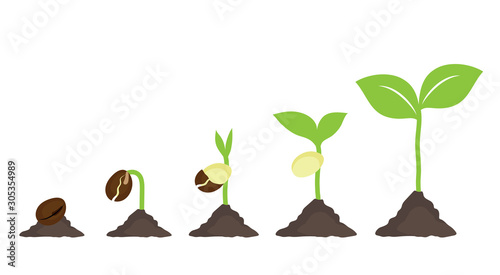 seeds are growing from ground. isolated growth step of plant on white background