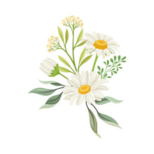 Bouquet Of Daisy Flowers Vector Composition. Natural Floral Decoration