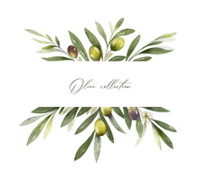 Watercolor Vector Banner Of Olive Branches And Leaves.