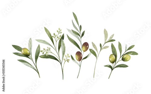 Fototapeta Watercolor vector bouquet of olive branches and flowers. obraz