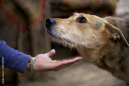 Photo Children's hand holds out food to a stray dog in a shelter.