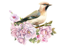 Bird On Branch With Rose Flowers On Isolated White Background, Waxwing, Watercolor Illustration